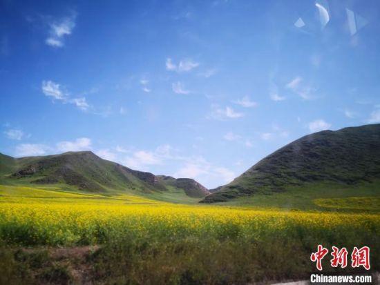图为甘南藏区草原生机盎然。(资料图) 冯志军 摄