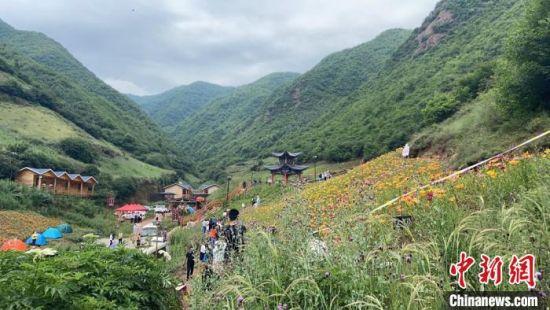 图为7月中旬,百合花盛开的百合谷。 高康迪 摄
