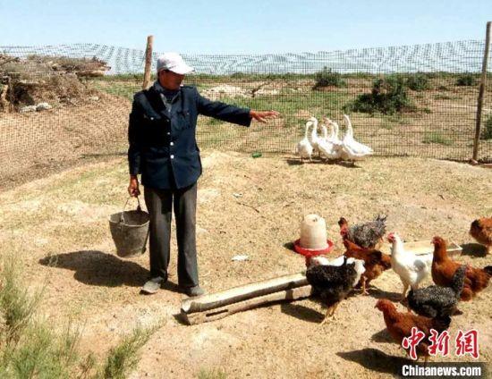 7月下旬,瓜州县锁阳城镇农户正在给鸡投食。 杜莹杰 摄