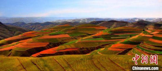 榆中县园子岔乡立足自然优势发展百合产业带动民众致富。 赵江梅 摄