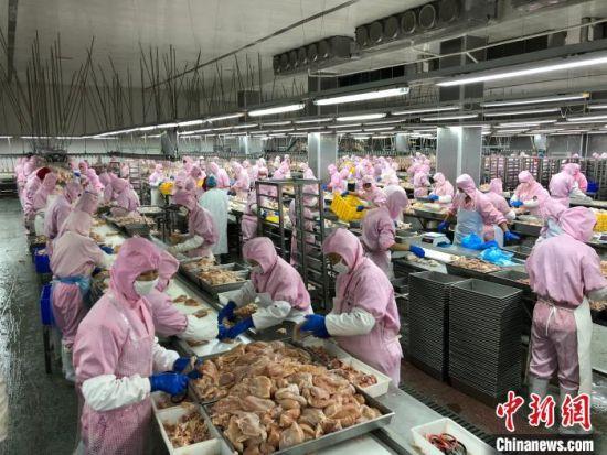 正在生产线上忙碌的工作人员。 于晶 摄