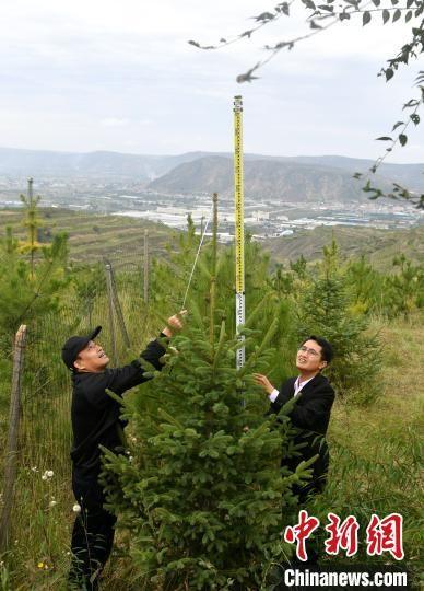 福建农林大学林学院教授张国防(左)与福建农林大学黄秋良老师(右)正在量树高。 吕明 摄