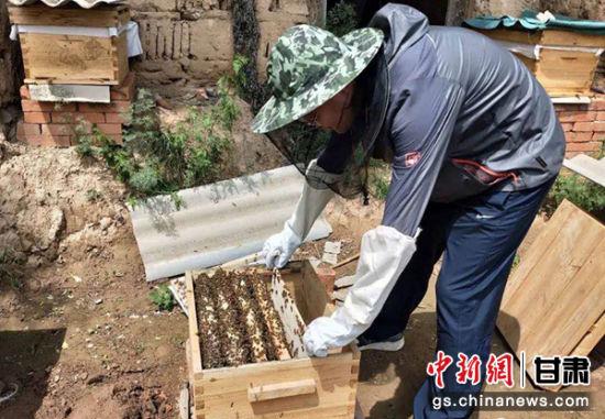 村民李斌斌在正宁县正源中蜂养殖农民专业合作社查看蜂箱。