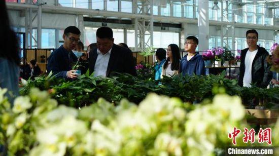 图为游客参观兰州新区花卉产业基地。 魏建军 摄