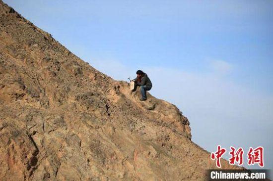 """图为敦煌""""80后""""画家张杰龙在敦煌三危山里采集矿石颜料。(资料图)受访者供图"""