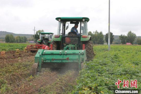 图为定西市安定区香泉镇马铃薯机械化作业现场。 张婧 摄