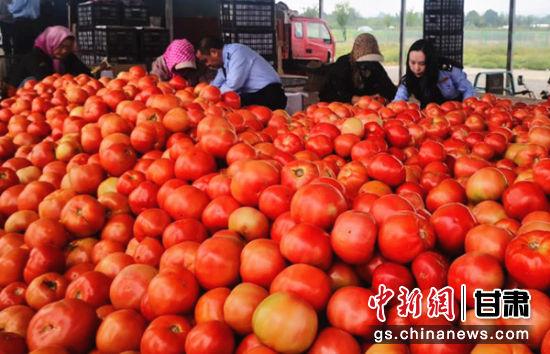 图为税务局的党员干部们与农户一起装箱蔬菜。史静静 摄