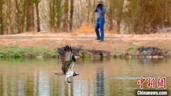 图为闫慧荣拍摄鸟类活动场景。(资料图)受访者供图