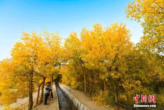 图为胡杨秋色吸引不少游客和敦煌市民前来赏秋。 王斌银 摄