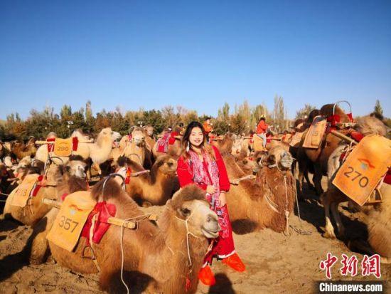 台湾大学生来到鸣沙山月牙泉景区,体验骑骆驼。 丁思 摄