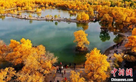 """图为甘肃金塔县境内的胡杨林景区,这里分布着西北地区最大的""""化石级植物""""万亩胡杨林。 吴学珍 摄"""