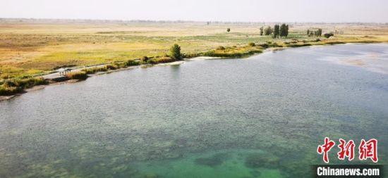 """秋日,有""""戈壁之肾""""之称的嘉峪关草湖国家湿地公园""""色域层叠""""如画。(资料图) 魏建军 摄"""
