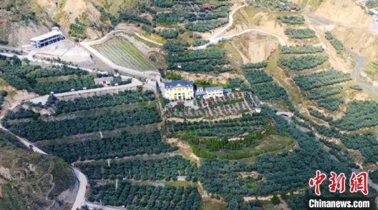 图为航拍武都区境内油橄榄树种植基地。(资料图)武都区融媒体中心供图