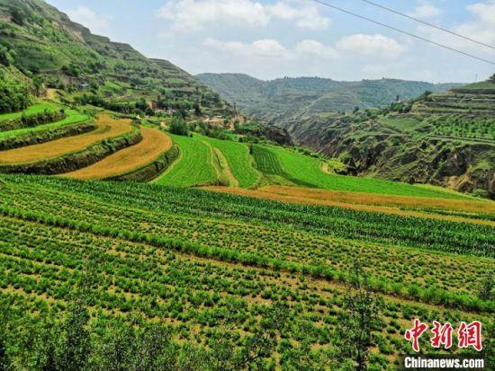 甘肃环县有358万亩耕地,其中大部分属于坡耕地。近年来,该县每年新修梯田15万亩,当地农民也从单一好地种粮发展到地膜种草。(资料图) 李文 摄