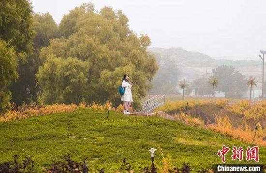 图为白银区荒山荒坡经过治理,景色如画,吸引市民游玩。 包兴鹏 摄
