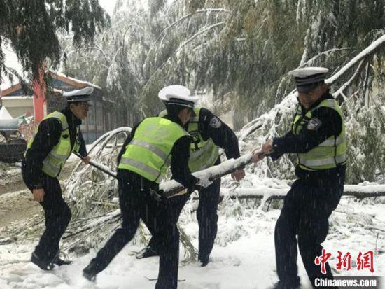 图为10月27日,甘肃临夏境内降雪导致树木被压倒,交警合力搬树进行路面清理。 王筱媛 摄