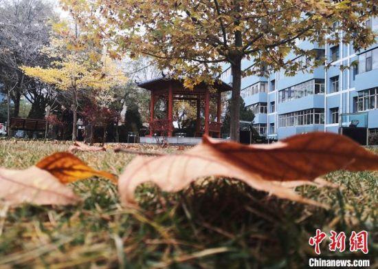 图为白银区改造老旧小区,建设生态园林化小区。 刘玉桃 摄