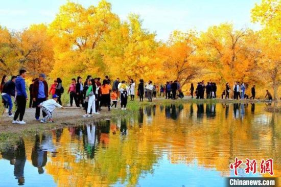 金秋十月,甘肃省酒泉市沙漠胡杨林景区一片金黄,宛如一幅巨型油彩画,正值最佳观赏期的大片胡杨林在一池碧水的掩映下,闪烁着耀眼的金光。  崔买牛 摄