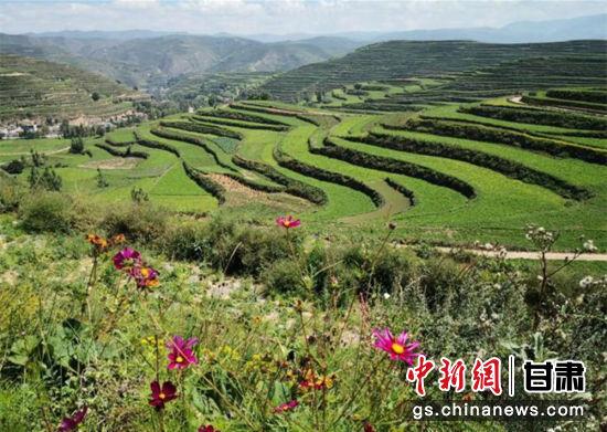 """甘肃素有""""天然药库""""之称,现有中药资源约2540种。图为陇南市境内的宕昌县中药材标准化生产示范基地。(资料图) 殷春永 摄"""