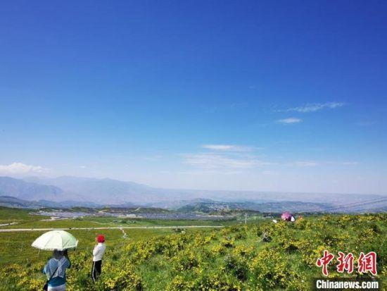 2020年7月7日,甘肃省临夏州积石山县境内,生态环境逐渐恢复,小黄花开遍山间。(资料图) 殷春永 摄