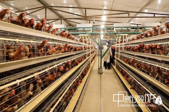 投资20万元作为村级集体经济入股双庙村养殖专业合作社。