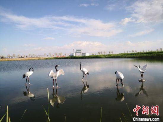 图为2020年5月中旬的肃州区六分西湖湿地景区。(资料图) 冯志军 摄