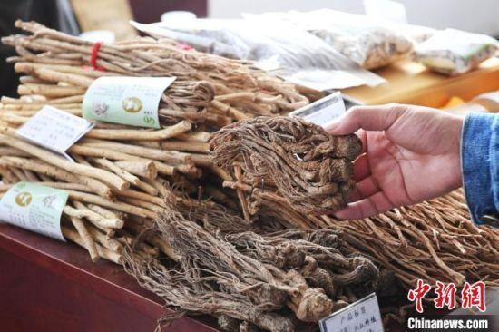 甘肃民乐中药材博览会上展出的中药材。(资料图) 杨艳敏 摄