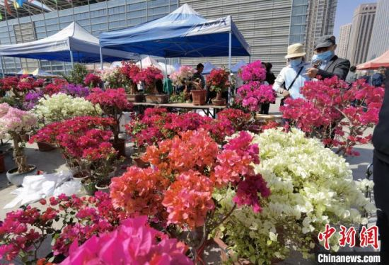 图为市民选购喜爱的花卉。 刘玉桃 摄