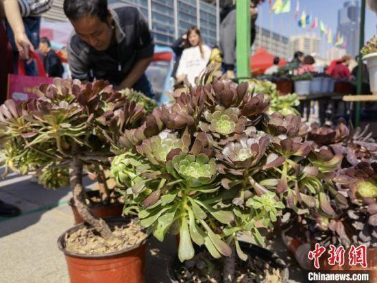 图为花博会上展出的绿植。 刘玉桃 摄