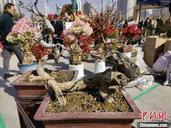 图为花博会现场出售的盆景。 刘玉桃 摄