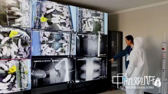 瓜州县德品金麦农业科技发展有限公司的养猪场视频监控系统。王翠 摄
