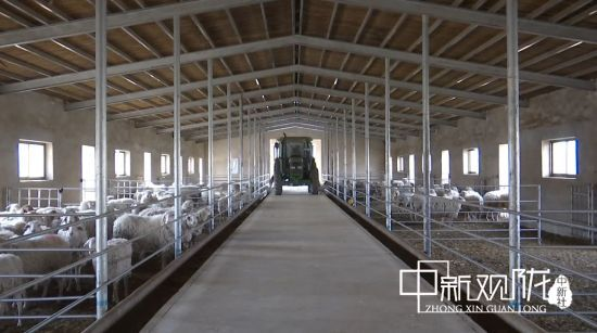 瓜州县高标准养殖圈舍。王翠 摄
