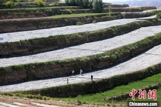 图为6月初,在兰州市榆中县韦营乡境内的纳米高效农业示范基地,几位台湾网红进行直播。 高展 摄