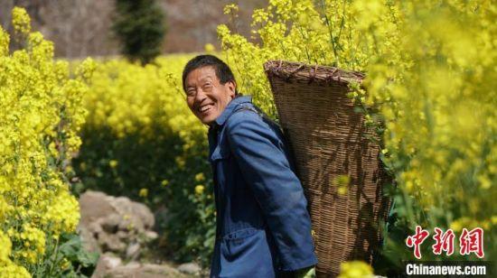 2020年3月中旬 陇南市文县丹堡镇的油菜花相继开放。(资料图) 魏建军 摄