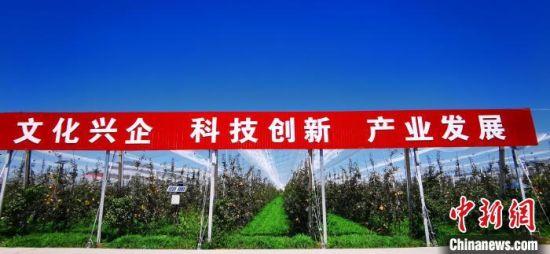 2020年9月,位于平凉市静宁县的甘肃德美现代有机苹果示范园。(资料图) 魏建军 摄