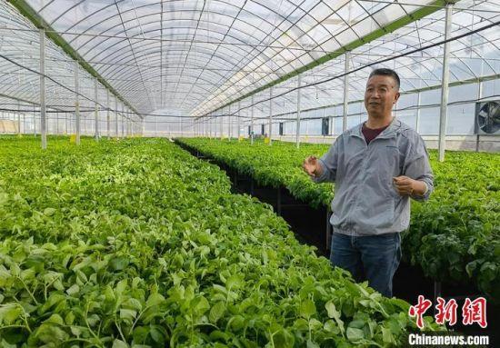 图为李进福介绍高科技种植马铃薯。 刘玉桃 摄