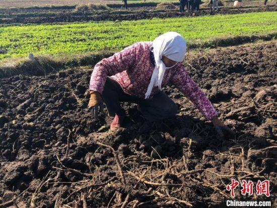 图为在田地里劳作的妇女。(资料图) 徐雪 摄