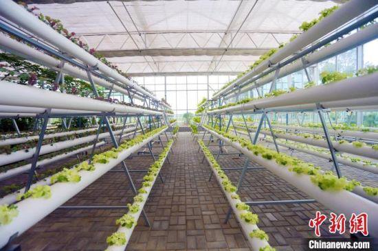 图为民勤县现代农业基地。(资料图) 高展 摄