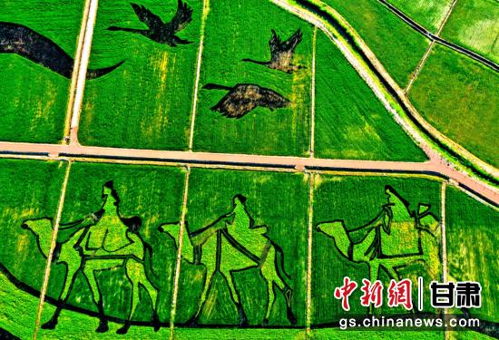 """7月中旬,甘肃""""戈壁水乡""""张掖市甘州区乌江镇彩色水稻组成的巨幅画作蔚为壮观。"""