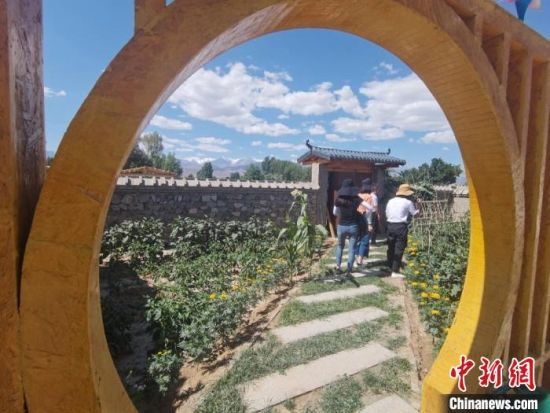 图为甘肃肃州区西洞镇新东村农家小院内,种满农作物与花卉。 闫姣 摄