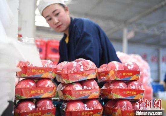 图为甘肃静宁县一企业工人对苹果进行精细化包装。(资料图) 杨艳敏 摄
