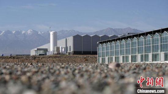 图为酒泉市肃州区东洞戈壁农业产业园区。(资料图) 魏建军 摄