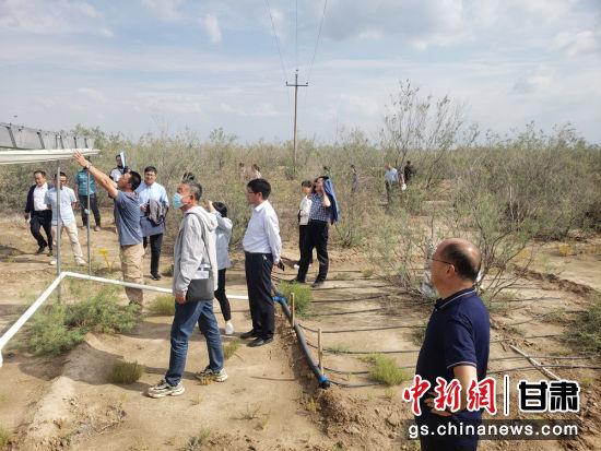 与会人员参观盐渍化站野外试验平台。