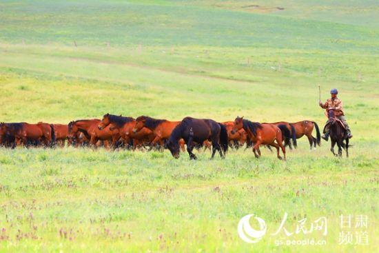 山丹马场的牧马人正赶着马在草原上驰骋。人民网 王文嘉摄