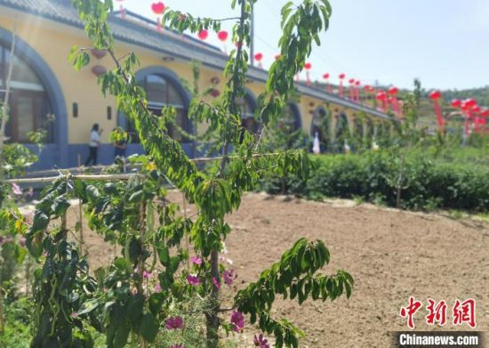 图为车道岭村建成的民俗窑洞宾馆。 杨娜 摄