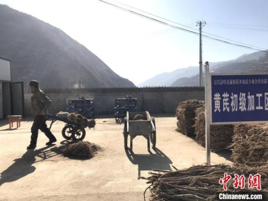 图为2020年1月29日,陇南市宕昌县哈达铺中药材加工厂内,当地农民加工中药材。(资料图) 闫姣 摄