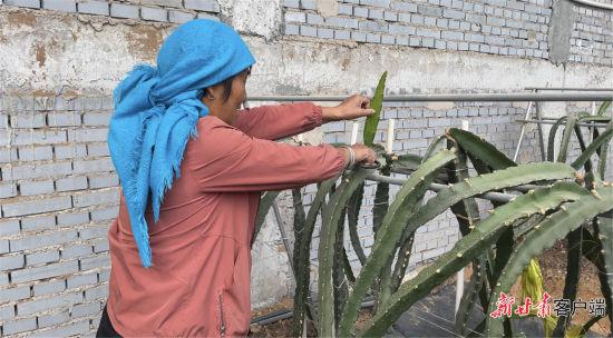 附近村民在大棚里工作