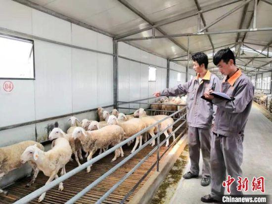 环县大学生登记羊信息。(资料图) 高展 摄