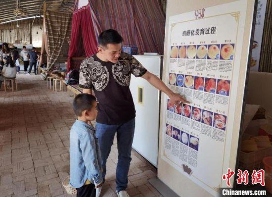 """在甘肃榆中养鸡的台商孙永瑞,他正在自家的""""好鲜生农场""""给前来参观的小朋友讲解小鸡孵化的过程。(资料图) 丁思 摄"""