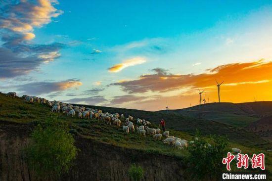 环县山区传统放牧。(资料图) 环县融媒体中心供图